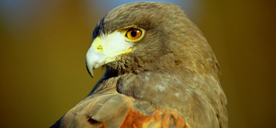 Falconry Experience Package