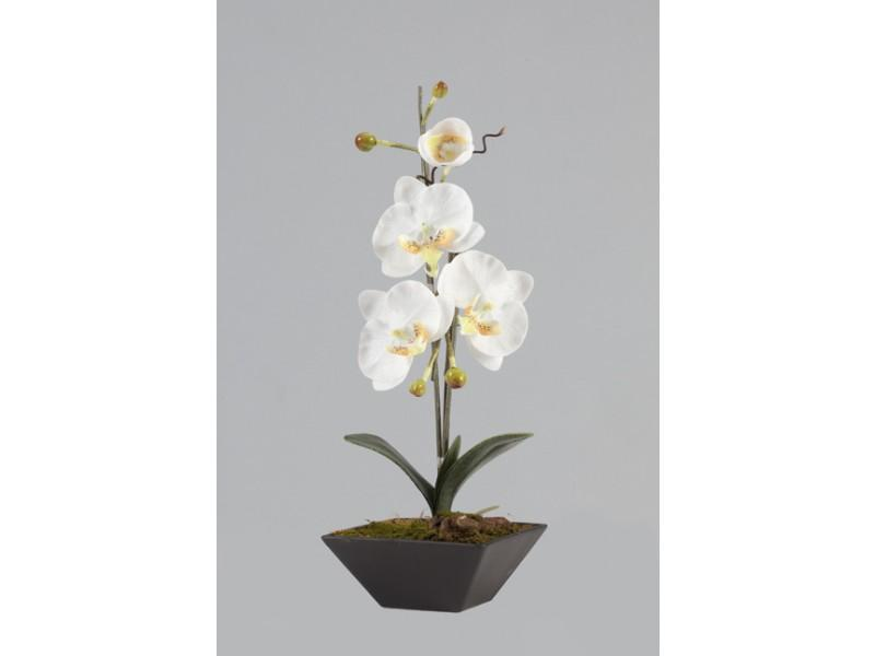 Flowers, White and yellow Phalaenopsis arrangement in Porcelain Black Pot. Size: H 43cm W 23cm.